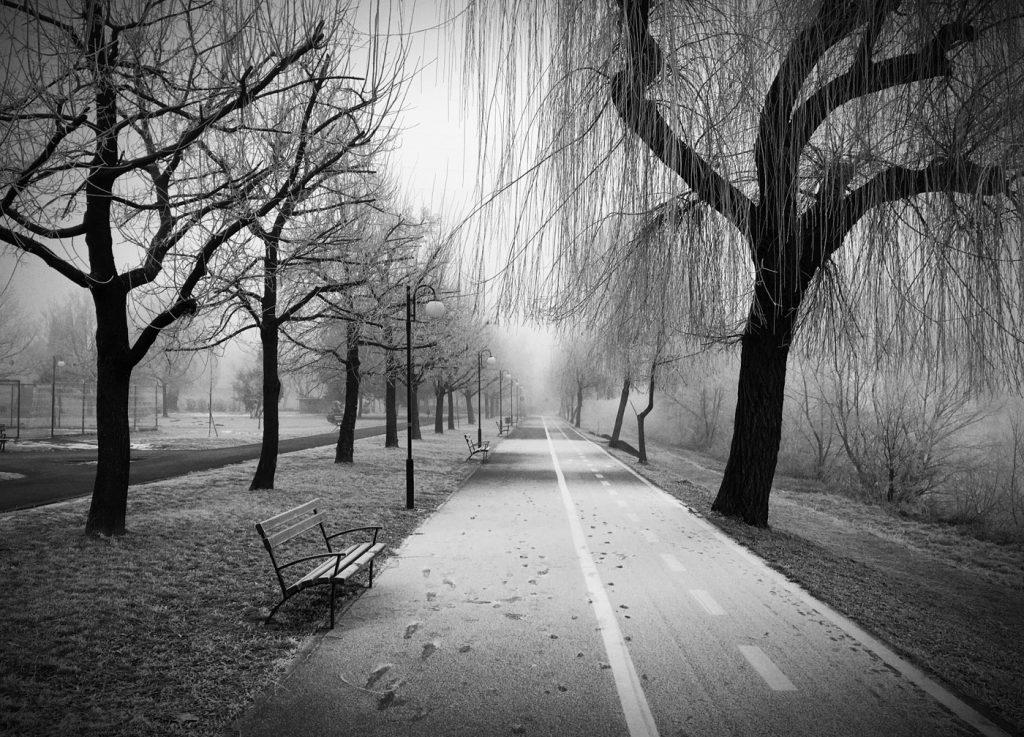 Ceață și Brumă. Malul Mureșului, Arad.