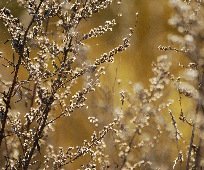 Pachet de toamna: landscape