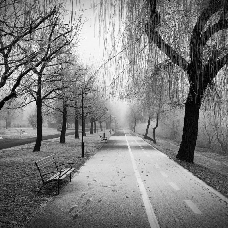 Ceață de dimineață